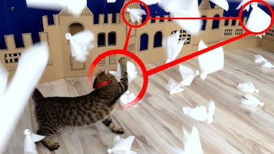 🐈👻Cat Kitten ATTACK on Ghost Town in Real Life.
