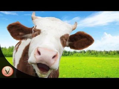 The Cows Are Watching Gameplay