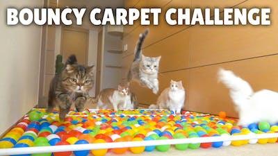 Bouncy Carpet Challenge!   Kittisaurus