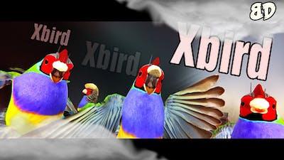 Let's Play: Xbird!