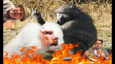 Starting the random chimp event in The Survivalists