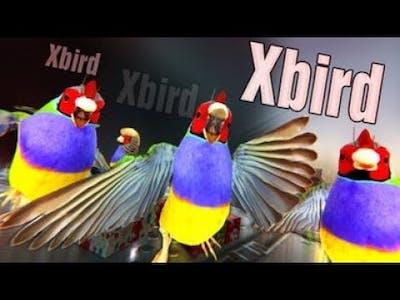 Xbird - Découverte [YoloKinoo]