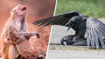 This Is How Animals Say Goodbye to the Dead
