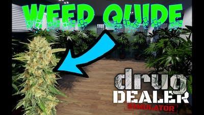 In Depth Guide To Weed (Drug Dealer Simulator Gameplay)