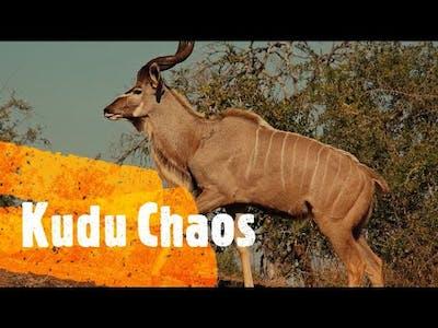 Hunting Unlimited: Kudu Chaos